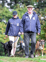 Walking towards camera head tilted down, Zara Phillips in blue MUSTO jacket, polo cap and beige jodhpur with boxer and labrador, and unknown older male.